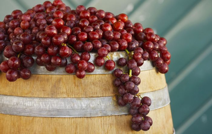 vino-fai-da-te-spumante-vendemmia-vite-vinificazione-imbottigliamento-cantina-degustazione-18