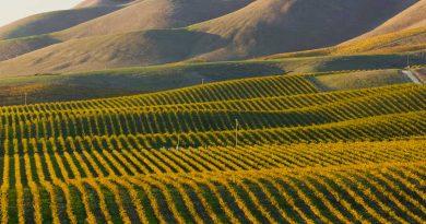 Fattoria-Pietrafitta-vino-fai-da-te-degustazione-viticoltura-vendemmia-1