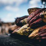 origine cacao